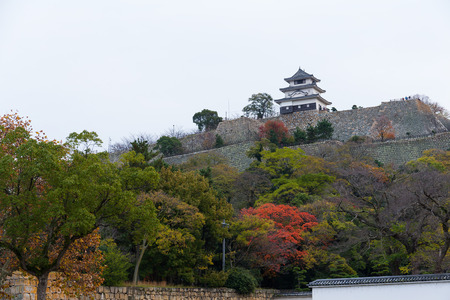 donjon: Marugame Castle in Japan at autumn