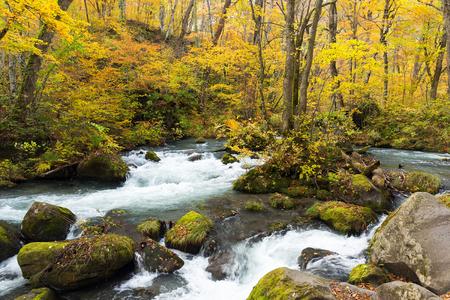 primeval: Oirase Stream in fall