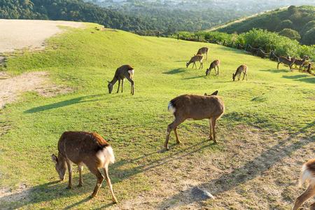 rack mount: Group of deer