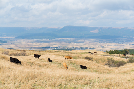 creamery: Cow farm agriculture Stock Photo