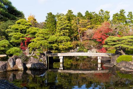 koi: Japanese garden in autumn season