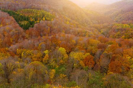 Hakkodasan in autumn season
