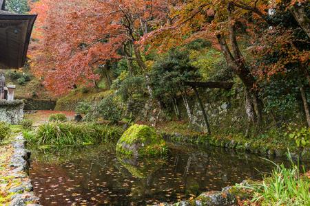momiji: Beautiful landscape in japanese temple