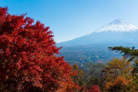 sengen: Fuji and maple Stock Photo