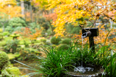 Water bamboo in japanese temple at autumn season