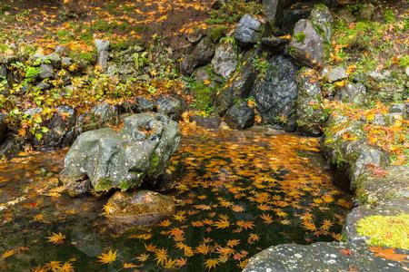 Beautiful maple landscape