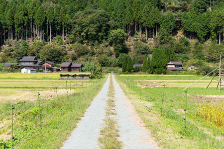 seeding: Rice field and mountain in Miyama