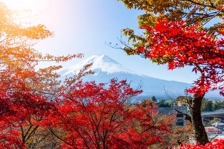 sengen: Mount Fuji and red maple tree