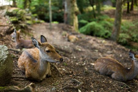 Deer lying on ground