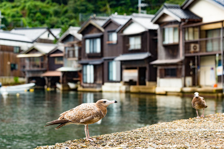 cocaine: Seaside town in Ine-cho of Kyoto city of Japan