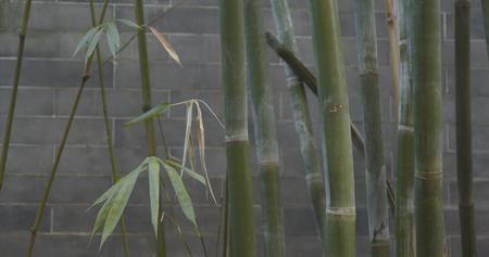 Chinese garden and bamboo  Stock Photo