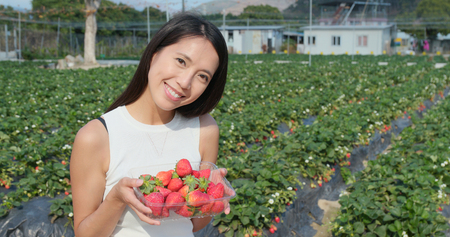 Woman holding strawberry harvest in field