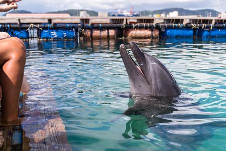 Dolphin listening to command Standard-Bild