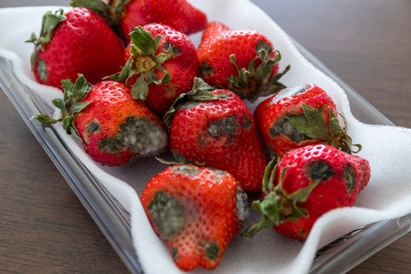 Gray mold on red ripe strawberries