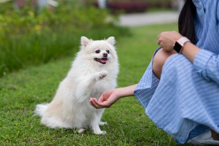 Perro Pomerania en el parque
