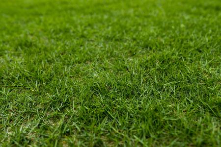 Green lawn meadow