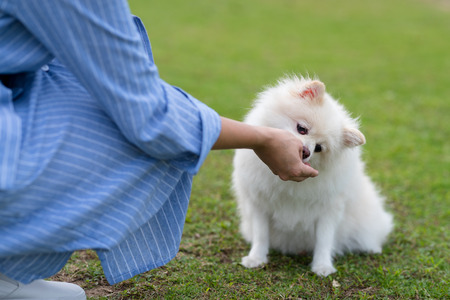 Feeding Pomeranian dog at outdoor park 版權商用圖片