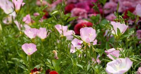 Beautiful flower garden 免版税图像