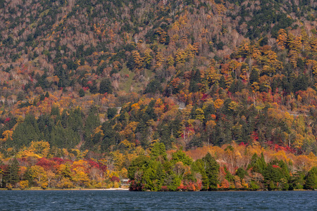 Autumn forest landscape and lake