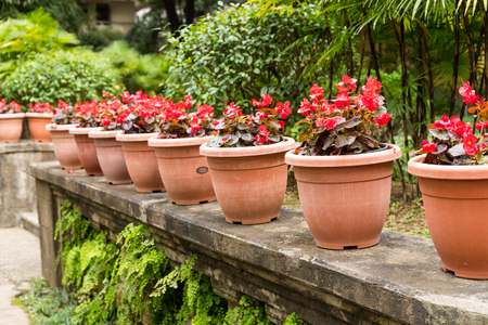 Flower pot in the garden Stock Photo
