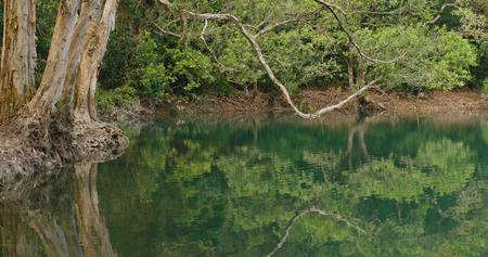 Hermoso estanque del lago