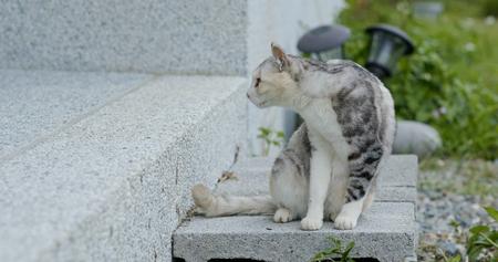 Cat in the garden Stockfoto