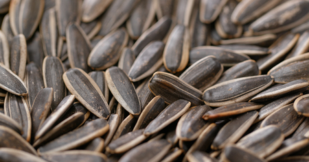 Sunflower dry seed