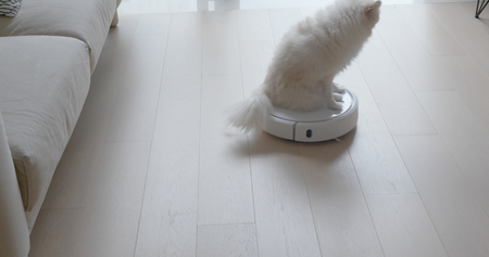 Pomeranian Dog sit on robotic vacuum cleaner slides across the room at home