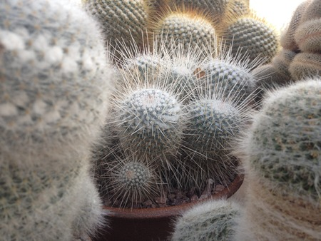 Close up of potted cacti