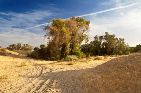 ashdod: Desert in the vicinity of Ashdod