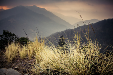 inspiring: Blades of grass with cloudy landscape at sunrise looking down a valley from the path up to Poon Hill from Ghorepani. Annapurna conservation region, Nepal.