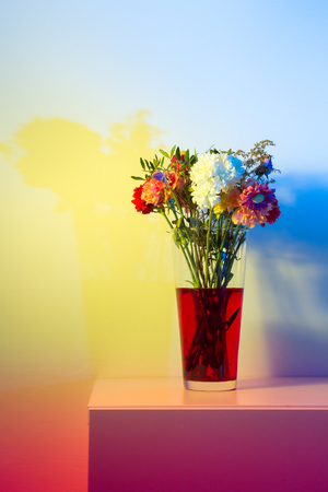colored gels: Flowers just starting to wilt in a tall transparent vase and red water in front of a white wall colored a number of colors with speedlights and gels.