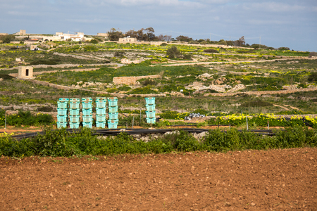 pesticides: Vegetable crates stacked in a field ready to be packed during harvest. Bahrija, Malta.