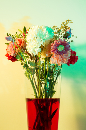 colored gels: Flowers just starting to wilt in a tall transparent vase and red water in front of a white wall colored yellow and green with speedlights and gels.