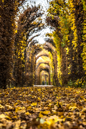 vanishing point: Tunnel of leaves in a park in autumn.