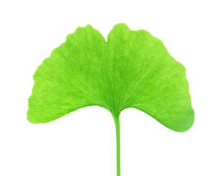 Isolated Ginkgo Biloba Leaf Stock Photo