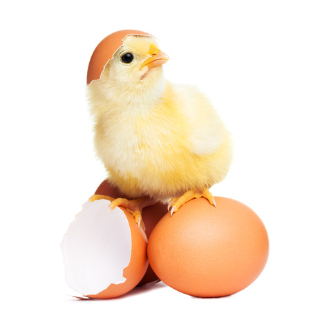 funny easter: Cute funny easter chick