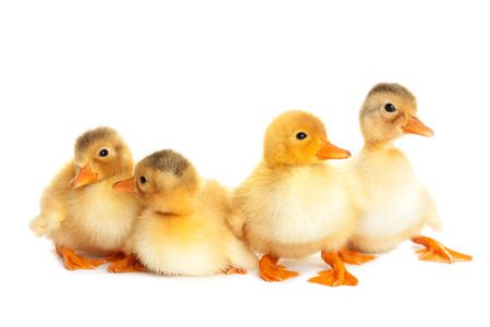 Duckling fun