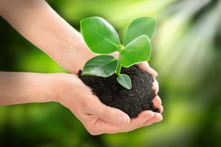 hands holding plant: Hands holding plant ecology concept Stock Photo