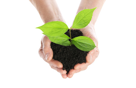 plant hand: Hand holding plant isolated Stock Photo
