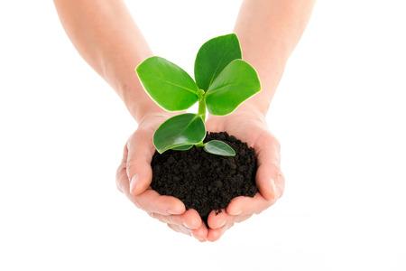 feuille arbre: Main avec plante verte