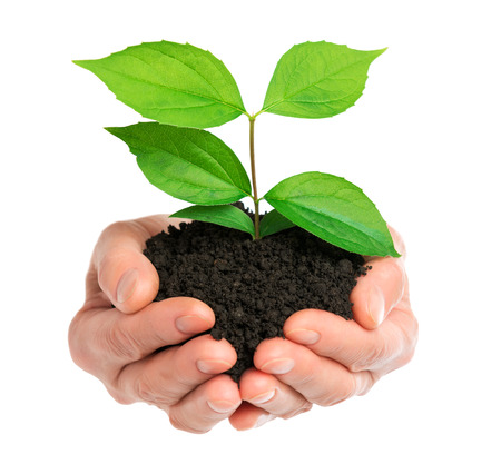 Hands holding green plant isolated Stockfoto