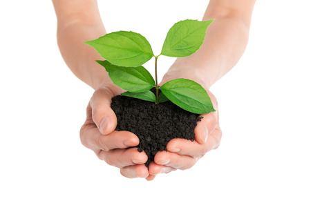 green life: Hands holding green plant new life concept