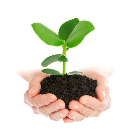saplings: Green plant in hand new life