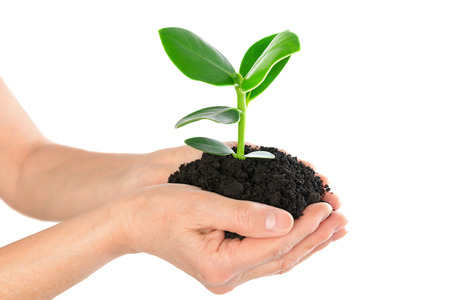 Young plant in hand Stock Photo