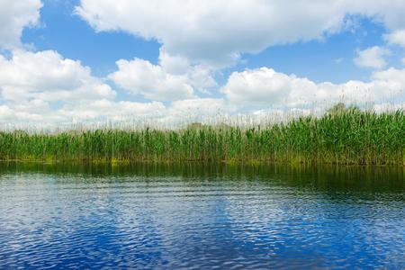 danubian: Fields of cane in Danube Delta