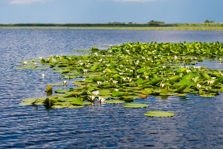 danubian: Landscape in Danube delta, Romania Stock Photo