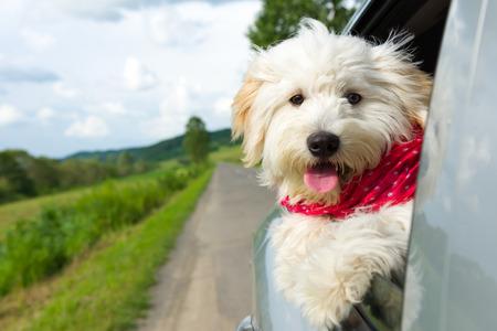 perros graciosos: Perro que goza de un paseo con el coche