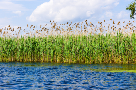 Reeds reflecting on the water, Danube Delta