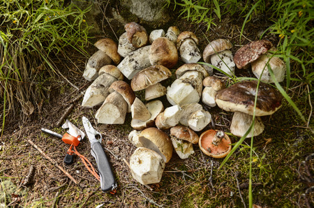 penny: penny bun mushroom Stock Photo